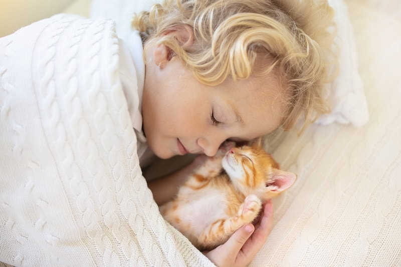 Why Do Cats Get In Your Face While You Sleep?
