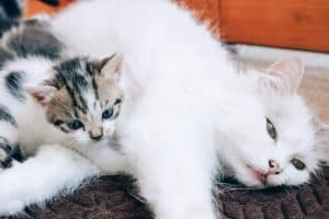 Will A Mother Cat Abandon Her Kittens If Touched By Humans