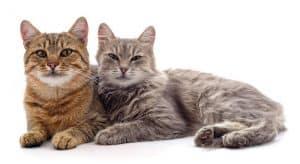 Will Bleach Keep Cats Away
