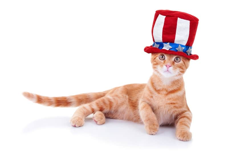 Cats are the second-most popular pets in America.