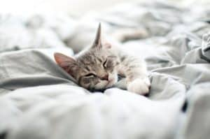 Cats spend at least 70% of their lives sleeping