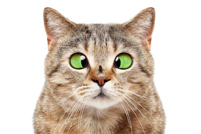 Do Cats Eat Bugs?