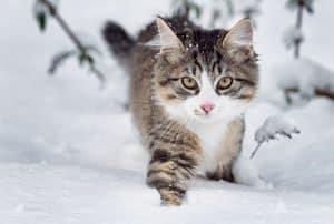 Do Cats Get Winter Coats