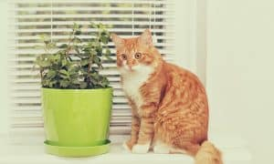 Do Cats Hate Peppermint