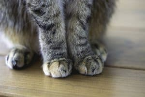 Do Cats Have Whiskers On Their Legs