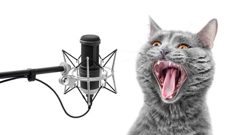 Why Do Cats Hate Singing?