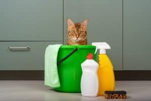 Why Do Cats Like Chlorine and What Are The Risks