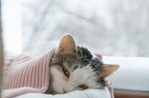 How To Tell If Your Cat Has A Fever Without A Thermometer?